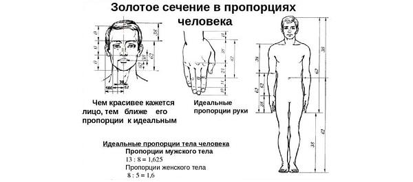 золотое сечение в пропорциях человека